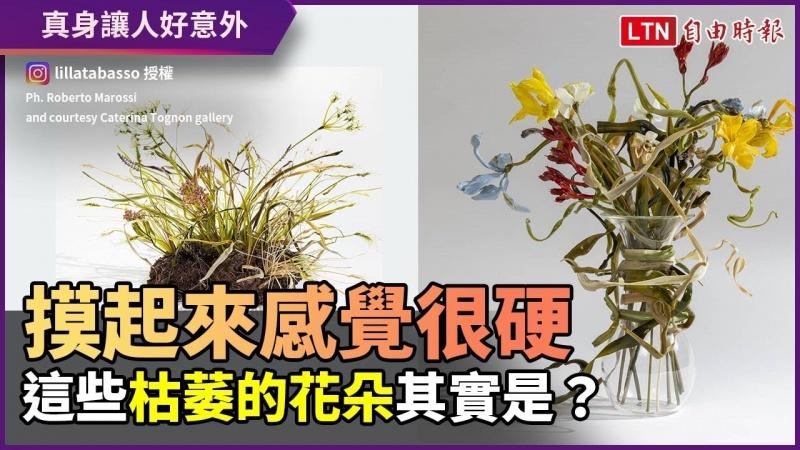 這個摸起來是硬的?枯萎花卉的真身讓人超訝異