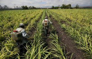 糖、植物油帶動漲 全球糧價創新高