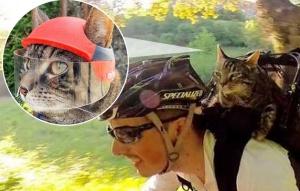 好大膽的貓貓!跳傘、滑雪樣樣沒在怕