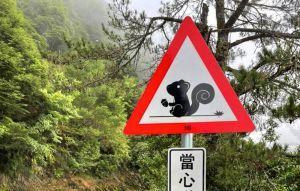 好萌!合歡山公路獨特警示牌
