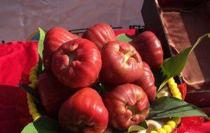 蓮霧品種大集合 黑糖芭比、紅寶石你吃哪一款?