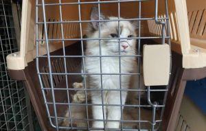 走私名貓害安樂死 檢起訴9嫌從重量刑
