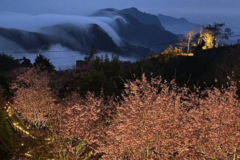阿里山頂石棹櫻之道 夜映雲瀑美景無敵
