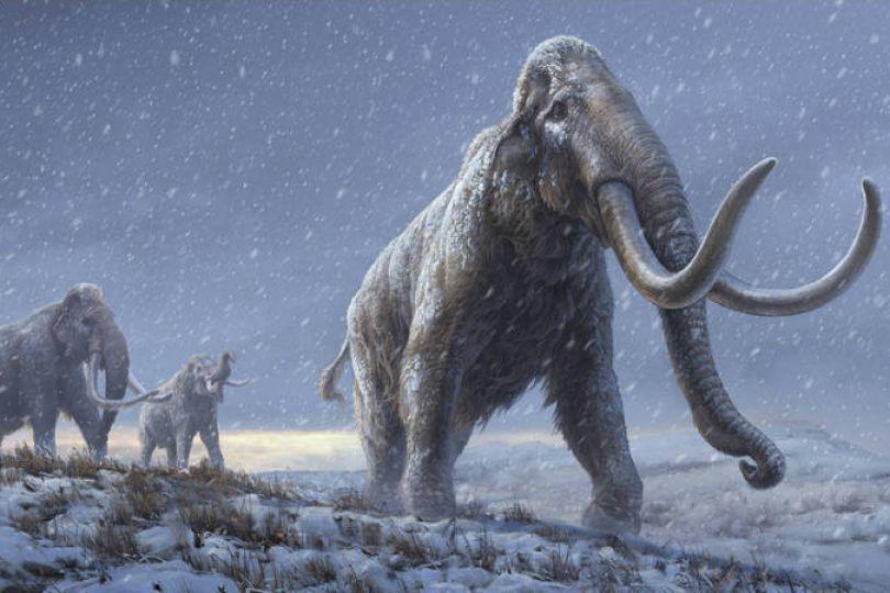 最新研究:北美長毛象曾與人類共存於世