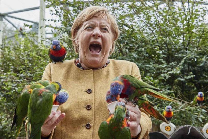 德國鐵娘子餵鸚鵡 被啄手尖叫連連