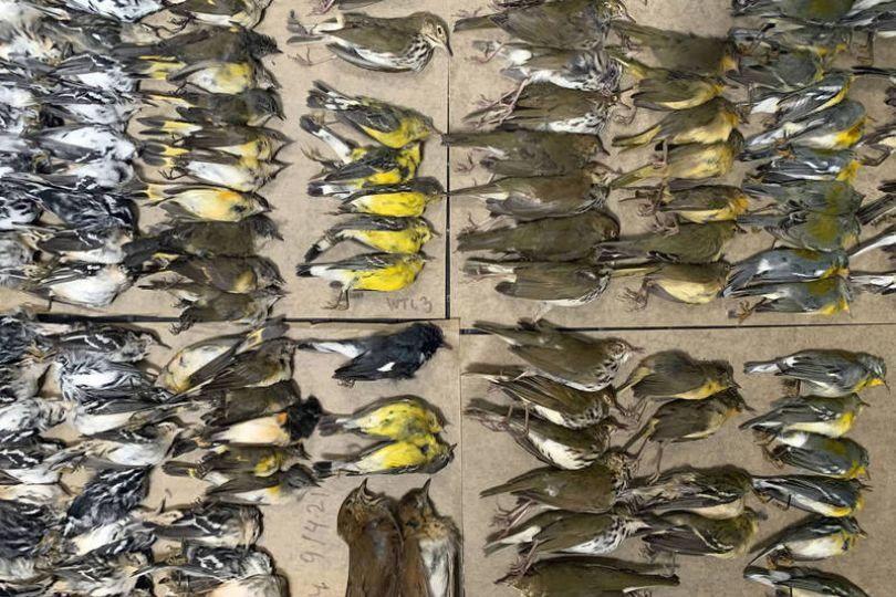 紐約世貿中心滿地鳥屍 悲傷真相曝光