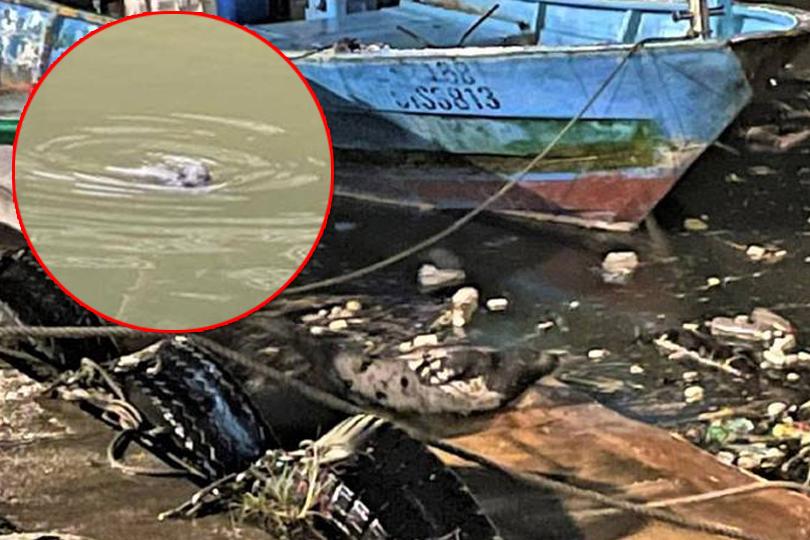 亞熱帶稀客小海豹 誤闖新北鼻頭漁港