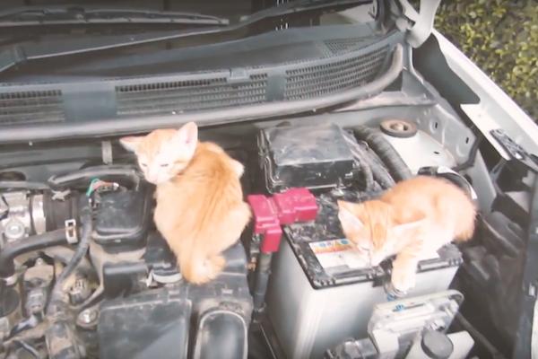 很有愛的 Nissan! 推廣輕敲引擎蓋提醒喵星人活動(有影片)