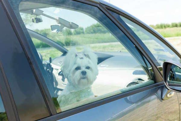 獨留毛小孩在車內,後果絕對不堪設想!(有影片)