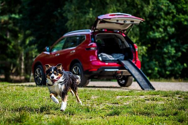 這套件是毛小孩專用!Nissan X-Trail Paw Pack 量產問世(內有影片)