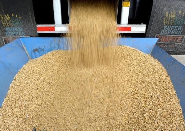 貿易戰抵制大豆 美分析師:沒有影響