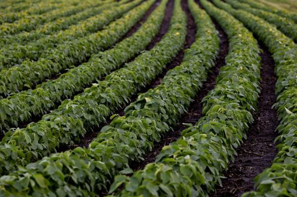 反制美國直捅川普票倉 中國7月起對亞洲5國大豆進口零關稅