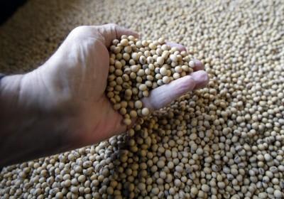 不怕美國大豆進口減少缺口 中官方:完全有能力應對