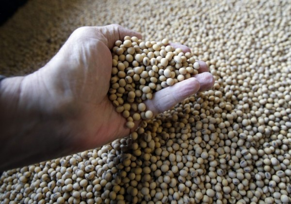 中國打大豆牌自食惡果  中企「大豆王」宣布破產