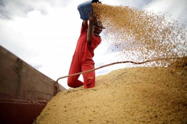 貿易戰休兵後首度大規模採購 中國買50萬噸美國大豆