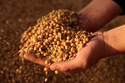貿易戰一休兵 中國狂買500萬噸美國大豆