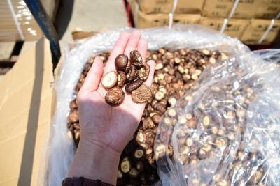 端午節前查獲大批走私中國香菇!總量超過10噸