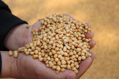 中國政府灑幣補貼 農民一窩蜂跟種大豆