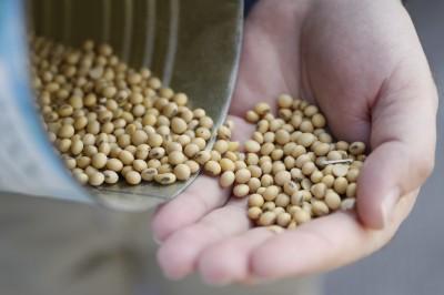 貿易戰、非洲豬瘟橫行 中國5月大豆進口量驟減24%