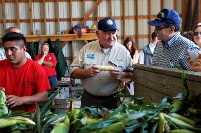 貿易戰衝擊 美國再發放農民160億美元補助