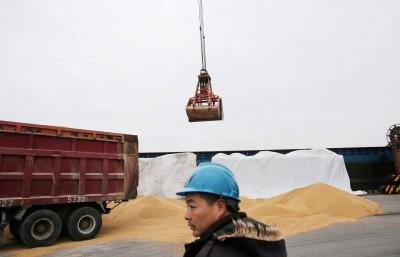 還是得買!彭博爆:中國豁免國內企業 可進口達300萬噸美大豆