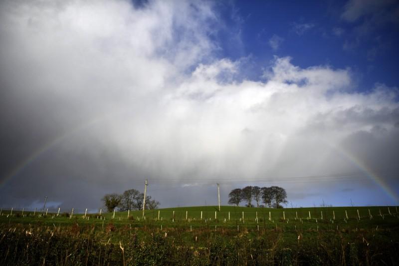 英脫歐效應!農場大缺工 數千噸蔬果任其腐爛