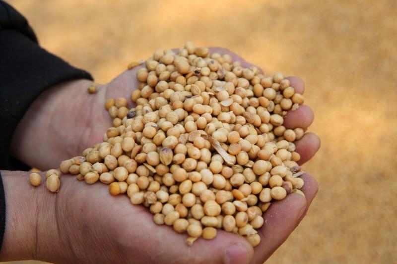 撐不住了!中國對美大豆減免關稅 中企狂買30萬噸