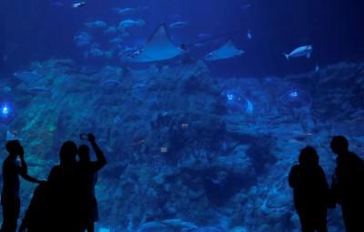 輝煌不再! 香港海洋公園連虧4年、去年度大虧近22億