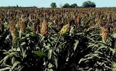 關稅豁免後  彭博:中國買家重返美農產品市場