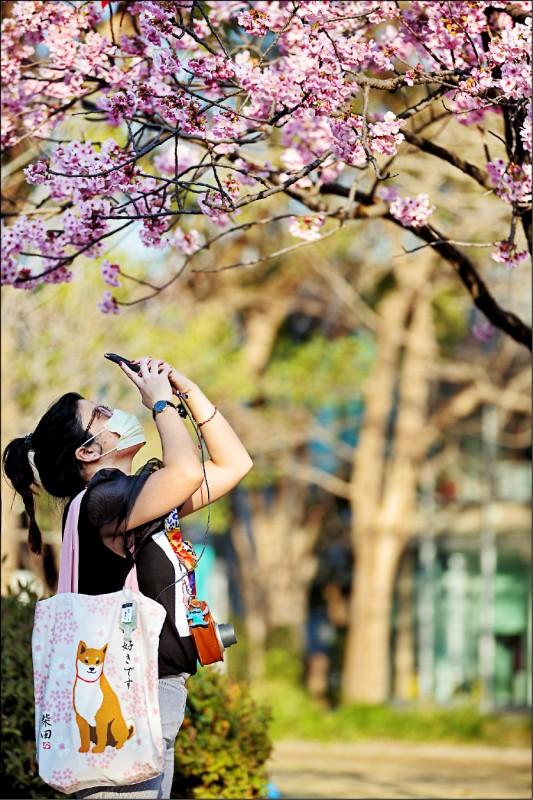 〈財經週報-疫情慘業〉旅行社 出團泡湯 史上最慘櫻花祭