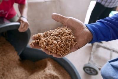 越泰乾旱+中國建壩  泰國出口米價衝6年新高