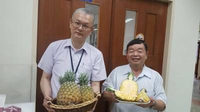 鳳梨新品種問世!有「芒果鳳梨」美譽「台農23號」有望成市場明日之星