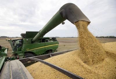中國停買美國黃豆? 美國出口協會否認