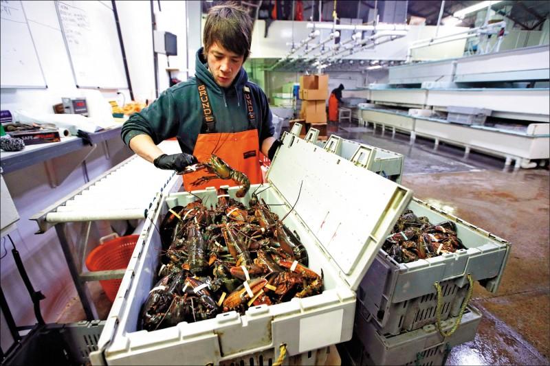 點名中國、歐盟 川普:不撤龍蝦關稅將報復
