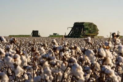中國砸逾292億買美國棉花 僅為兌現協議承諾