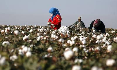 反擊北京侵犯維吾爾人權 美國將禁新疆棉花與番茄製品進口