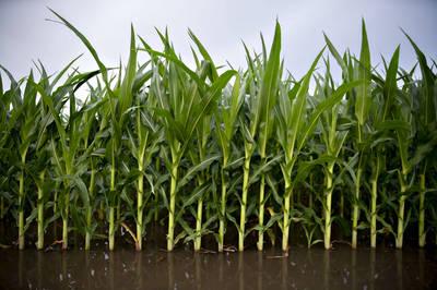 9月以來最大筆!中國簽訂美國玉米購買協議