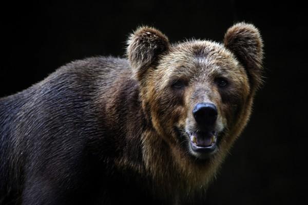 逃不過「熊抱」? 投資人的熊市生存3大指南!