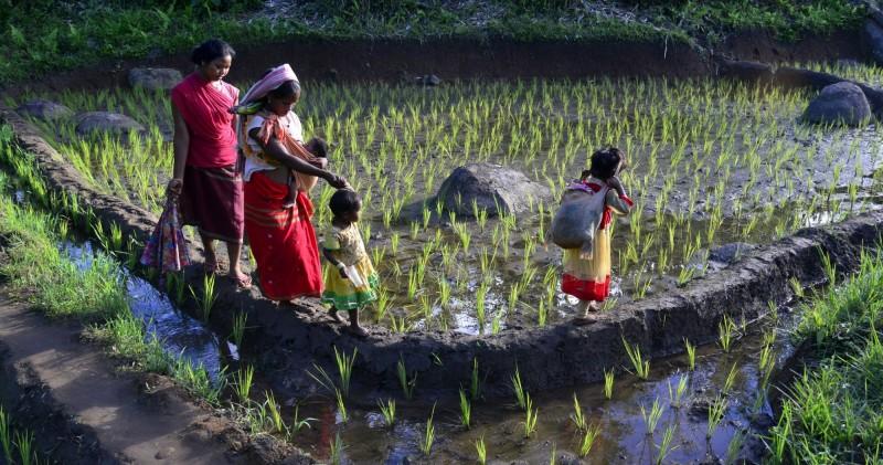 為搶選票!傳印度政府將考慮直接給農民發放現金