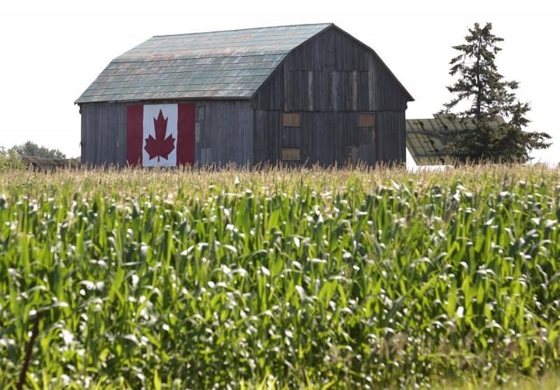 加拿大農民  美中貿易戰又一大贏家