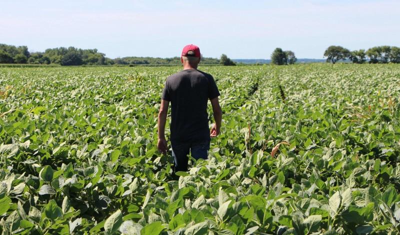 貿易戰、洪水重擊  美農民去年獲利10年來第2低