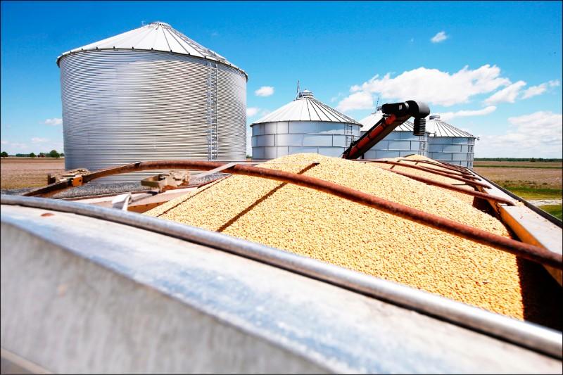 中國黃豆商︰利潤低 不進口美豆