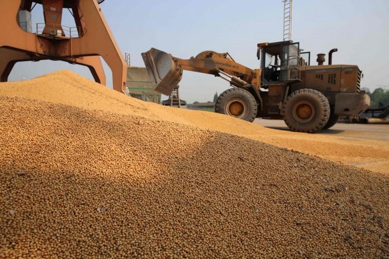 逾4000噸!首批俄羅斯大豆已進入中國