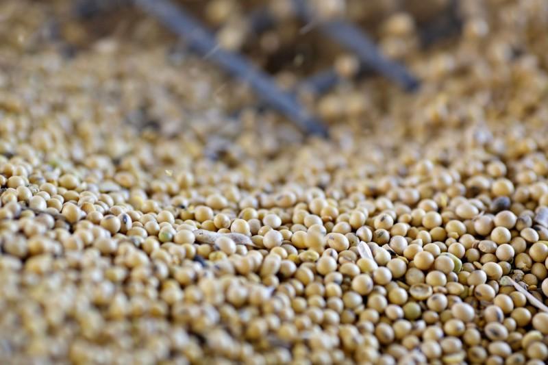 加強合作!外媒爆:台灣將買1131億元美國農產品
