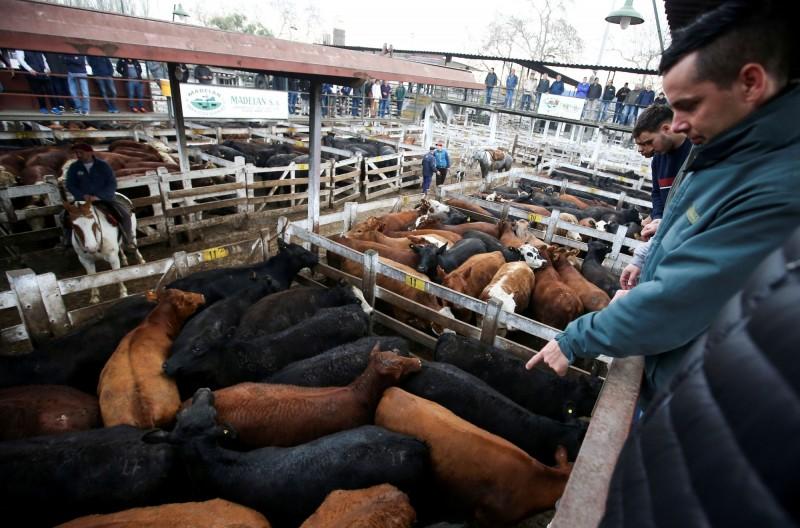 中國沒豬吃、爆買牛 這國牛肉出口飆增超過1倍