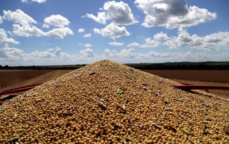 副部長貿易協商後 路透爆:中國再買60萬噸美國大豆