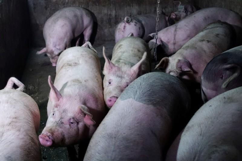 中國人吃豬肉更難了!豬肉價格狂飆 再創歷史新高