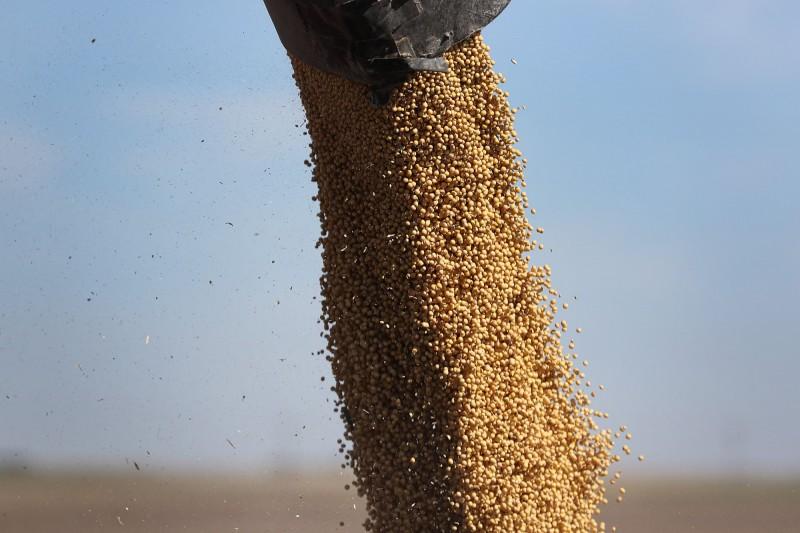 對協議樂觀!美黃豆出口協會:迅速恢復生產 重奪在中市佔