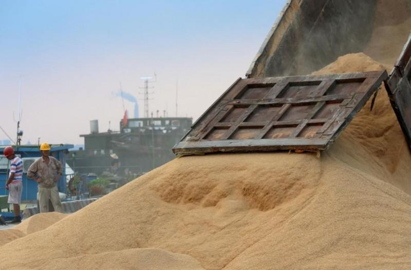 姿態放軟?中國傳開放美國大豆1000萬噸免關稅