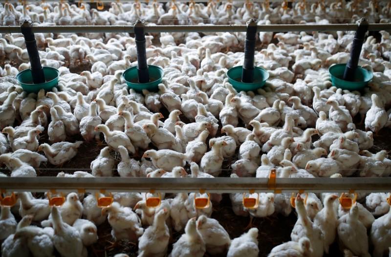 中國肉類短缺危機! 北京急終止對美家禽進口禁令
